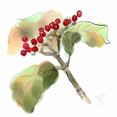 赤い実がついた枝