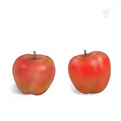 りんご(Painter と Photoshop)