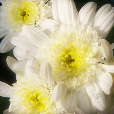 微発光する花